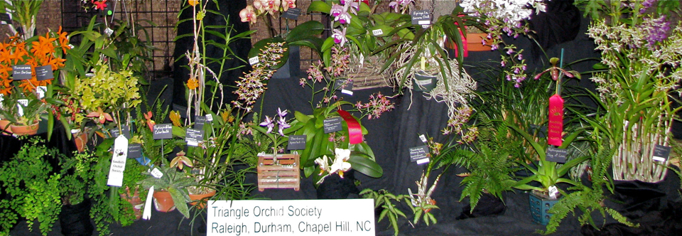 Upcoming Orchid Shows