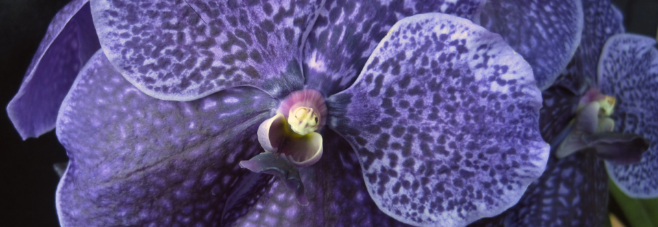 Fall Orchid Auction!